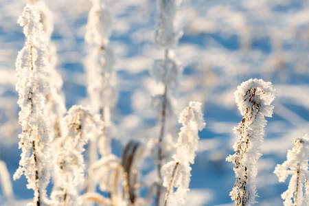 is covered: Plants Covered in Snow and Frost