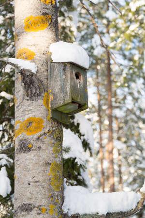aspen tree: Birdhouse on Aspen Tree with snow on it