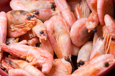 plenty: Plenty of Shrimp Close Up