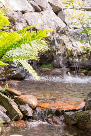 brake fern: Water Streaming in Creek with Fern on the side. Stock Photo
