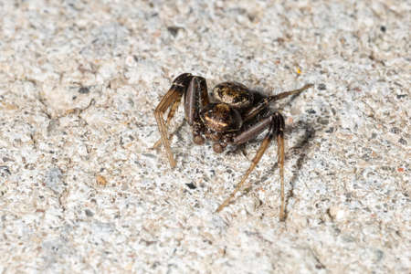 Small Spider Close Up on stone floor.