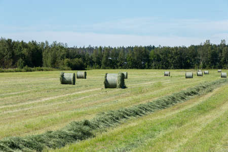 Silage Grass in Field with trees.
