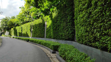 The road that looks beautiful with ornamental plants on the side of the road. Stok Fotoğraf