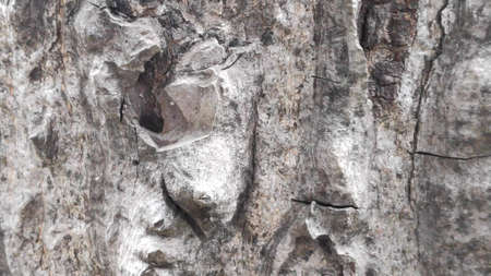 The rough surface of the tree bark is used as a background. Фото со стока