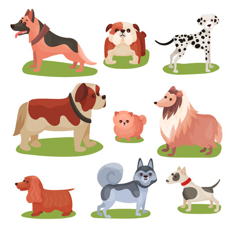 Different breeds of dog set on a white background.