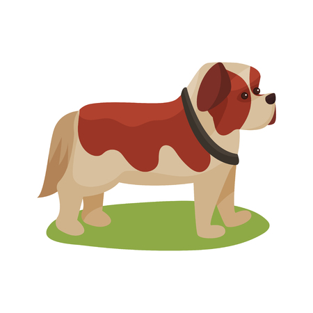 St. Bernard dog, purebred pet animal standing on green grass colorful vector Illustration on a white background
