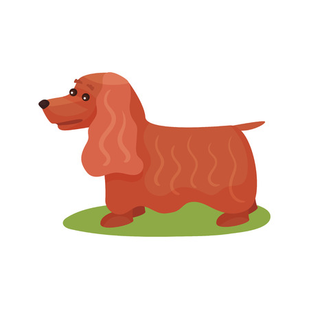 English cocker spaniel dog, purebred pet animal standing on green grass colorful vector Illustration on a white background Illustration