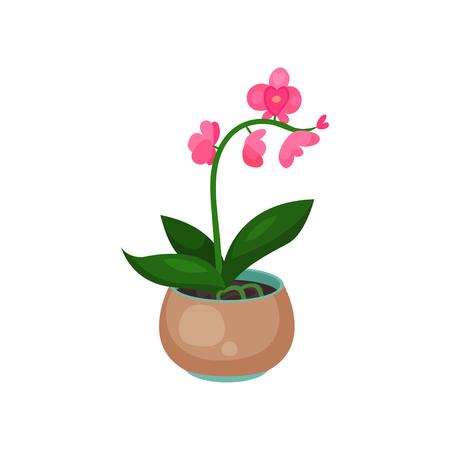 Orchid Phalaenopsis houseplant. Illustration
