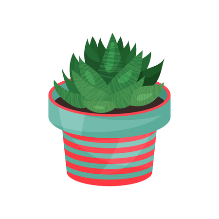 Aloe houseplant, potted plant. Illustration