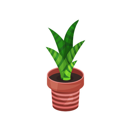 Sansevieria green houseplant, potted plant illustration.