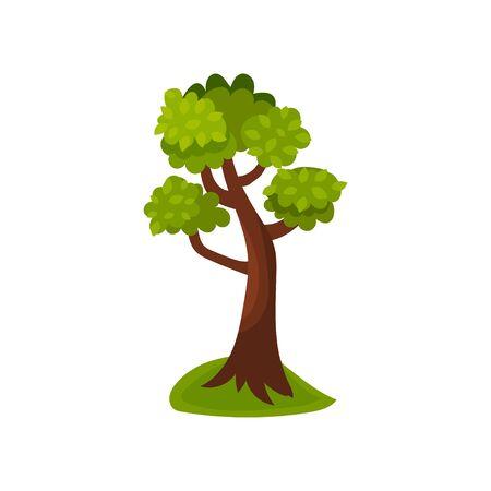 Summer deciduous tree vector Illustration