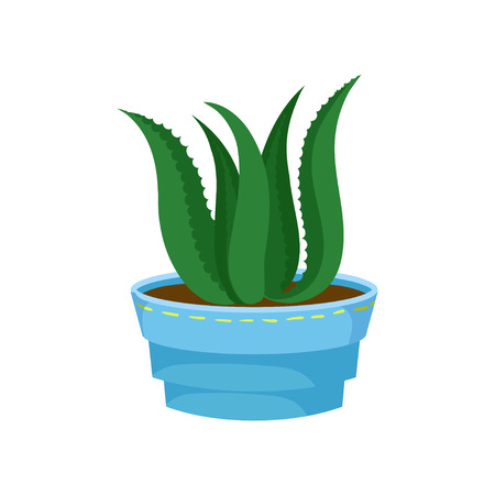 Succulent Aloe Vera in a pot, home plant in a flowerpot cartoon vector Illustration on a white background Illustration