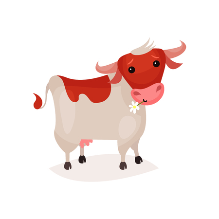 Cute funny brown and white spotted milk cow cartoon vector Illustration