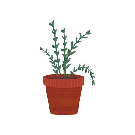 Herb in a flowerpot, rosemary or oregano in a brown pot cartoon vector Illustration on a white background Illustration