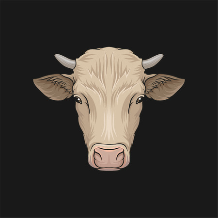 Head of cow, face of of farm animal hand drawn vector Illustration