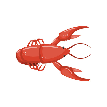 Lobster, fresh seafood cartoon vector Illustration on a white background