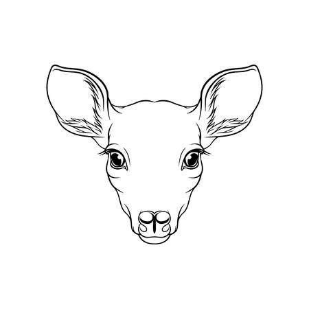 Esboço de cabeça de veado de corça, retrato de vetor de mão desenhada animal preto e branco de floresta Ilustração em um fundo branco