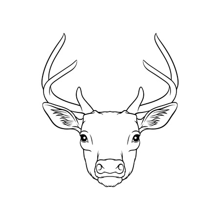 Sketch of deers head, portrait of forest animal black and white hand drawn vector Illustration on a white background