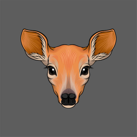 Head of roe deer, portrait of wild animal hand drawn vector Illustration on a grey background Vettoriali
