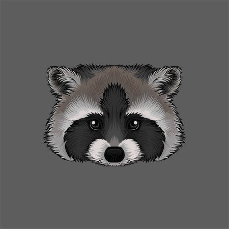 Head of raccoon, portrait of wild animal hand drawn vector Illustration on a grey background