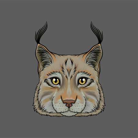 Head of lynx, portrait of wild serval cat animal hand drawn vector Illustration on a grey background
