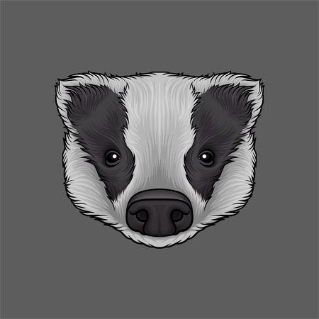 Head of badger, portrait of wild animal hand drawn vector Illustration Ilustracja