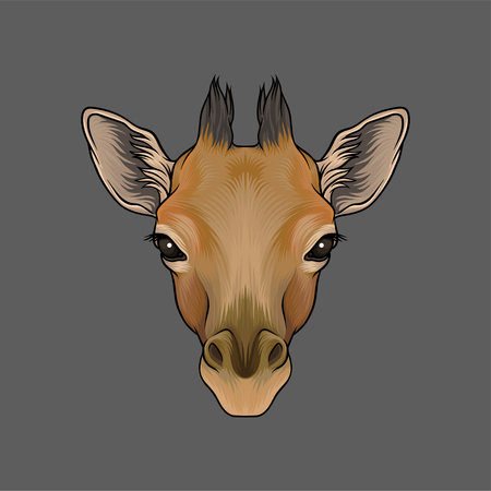 Head of giraffe, portrait of wild animal hand drawn vector Illustration on a grey background