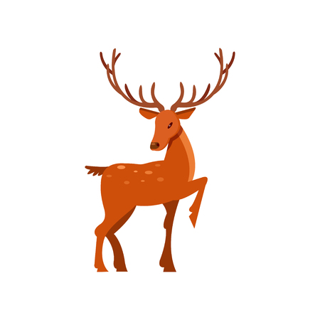Brown spotted forest deer with antlers, wild animal cartoon vector Illustration on a white background