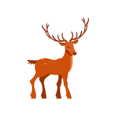 Brown spotted majestic deer with antlers, wild animal cartoon vector Illustration on a white background