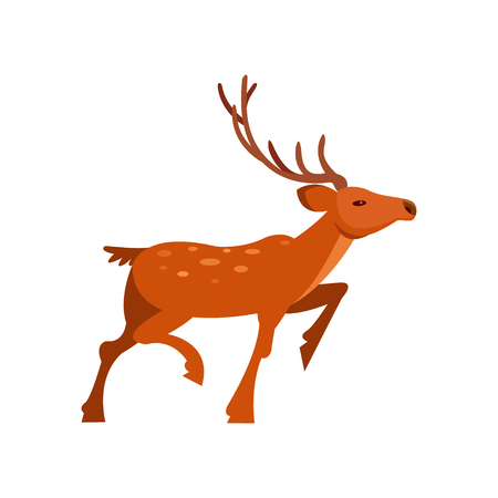 Brown spotted deer with antlers, wild animal cartoon vector Illustration