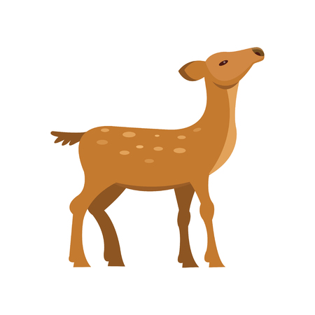 Graceful fallow sika roe deer, wild animal cartoon vector Illustration on a white background