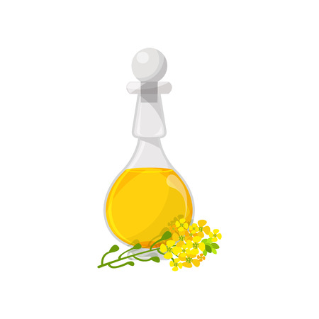 Glass bottle of rapeseed food oil, organic healthy oil product cartoon vector Illustration on a white background