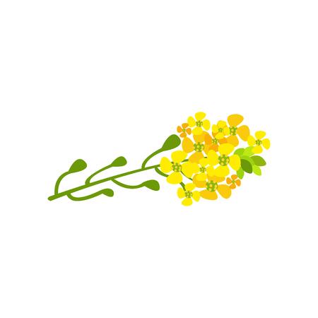 유채 꽃 만화 벡터 일러스트 흰색 배경에 일러스트