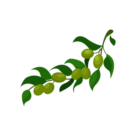 Olive branch with leaves cartoon vector Illustration on a white background