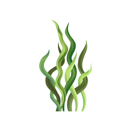 Underwater seaweed, aquatic marine algae plant vector Illustration on a white background