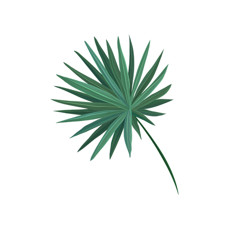 Green fan palm tree leaf vector Illustration