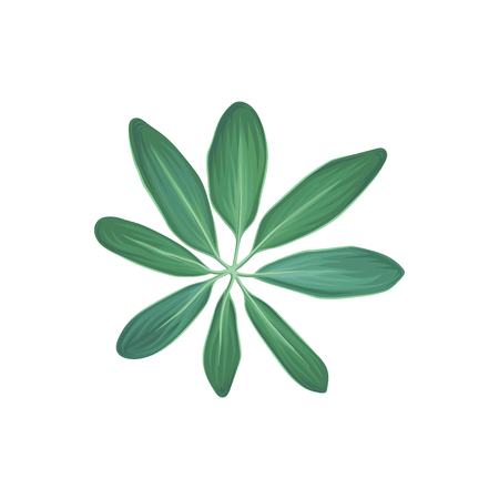 Green tropical plant, tropic botany element vector Illustration. Isolated on a white background.