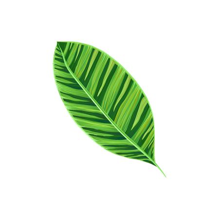 Leaf of tropical plant, tropic botany element vector Illustration