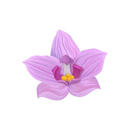 Tropical flower, tropic botany element vector illustration. Stock Vector - 94585499