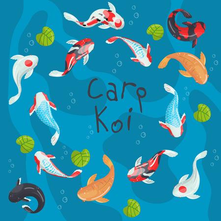 Carp Koi traditional sacred Japanese fish colorful vector Illustration, design element for banner, poster