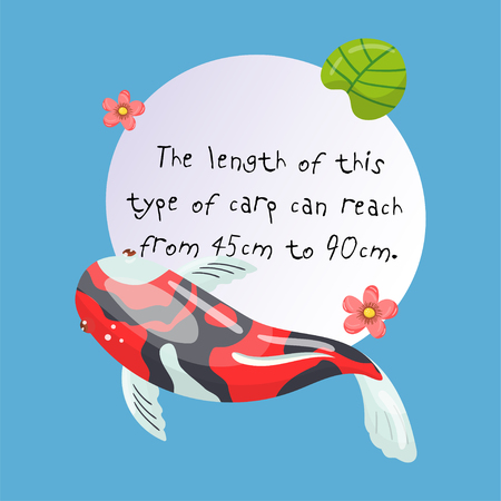 Features of Shova Carp Koi, traditional sacred Japanese fish, element for creating your own infographic design with handwritten text, colorful vector Illustration. Illustration
