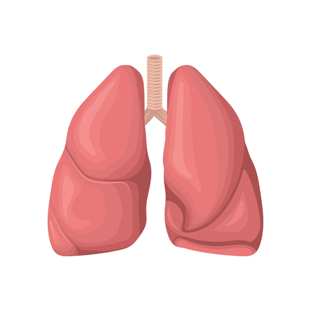 Structure of the human lungs, concept of respiratory system. Human internal organ. Detailed flat vector element for anatomy book, medical poster or brochure. Vectores