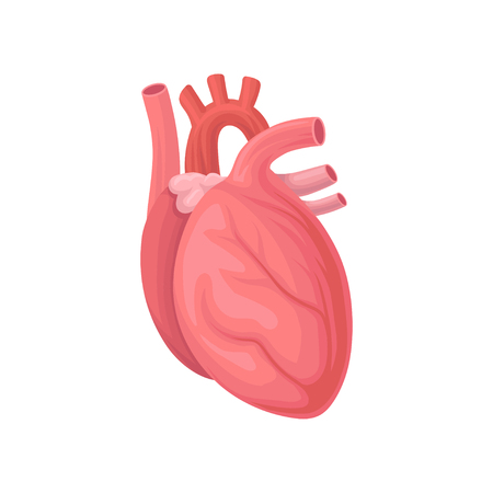 Cartoon illustration of human heart.
