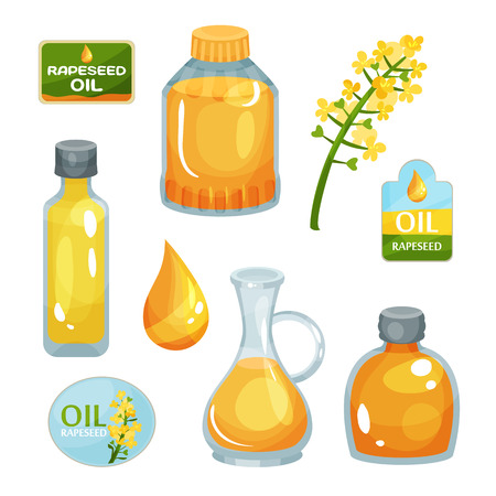 Bright-yellow rapeseed flower, vegetable oil in bottles of various forms, drop of liquid and branding labels. Colorful illustration isolated on white background.