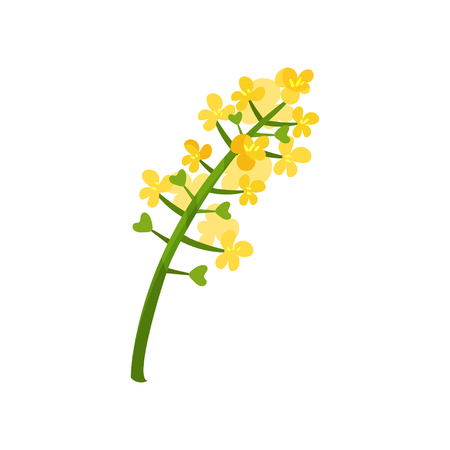 Small bright-yellow flowers on green stalk. Floral theme. Blooming plant.