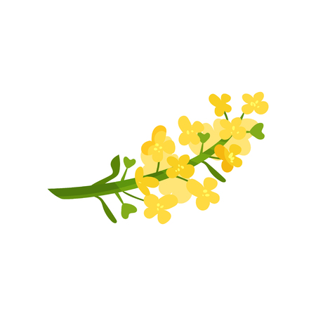 Cartoon illustration of small yellow flowers on green stalk. Wild blooming herb. Floral or botanical theme.