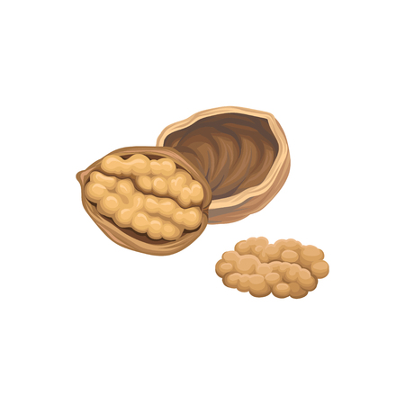 Walnut icon design  イラスト・ベクター素材