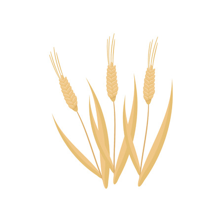 Cartoon flat vector icon of three dry wheat spikelets. Cereal plant. Organic agricultural crop. Farming theme. Graphic design elements