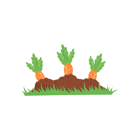 Carrot growing from ground. Vegetable on garden bed. Organic and healthy food. Agronomic product. Concept of farming or gardening. Colorful flat vector icon