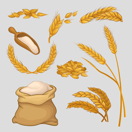 Organic agricultural wheat crop image illustration